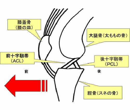 靭帯 前 術 十字 再建